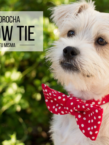 DIY Pet Bow Tie