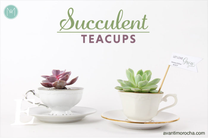 DIY Succulent Teacups