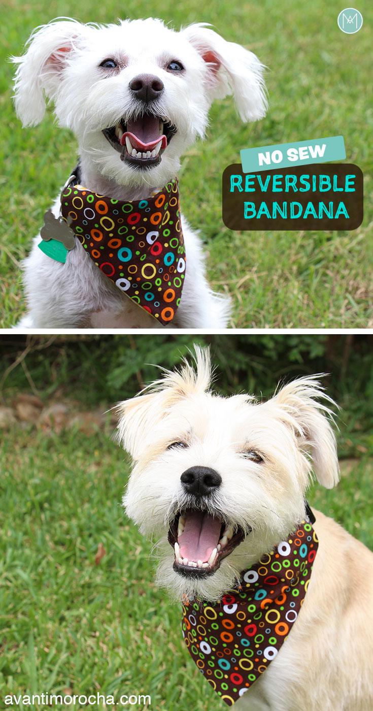 Diy No Sew Reversible Dog Bandana Bandana De Perro