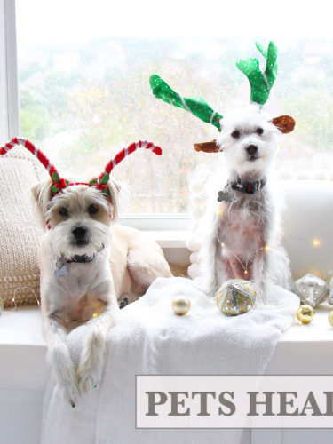 How to modify Dollar Tree headbands to fit your pets | Diademas para Mascotas